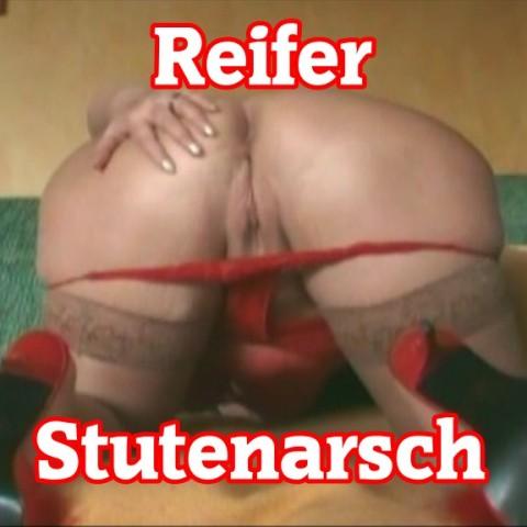 Reifer Stutenarsch